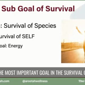 Episode 3 - Renewal and Conservation of Energy