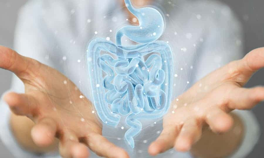 The Secrets to a Healthy Gut Microbiome